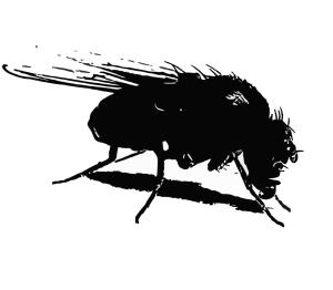 pretty fly 1
